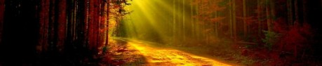 cropped-forest_light_mountain_path_rocks_trees.jpg